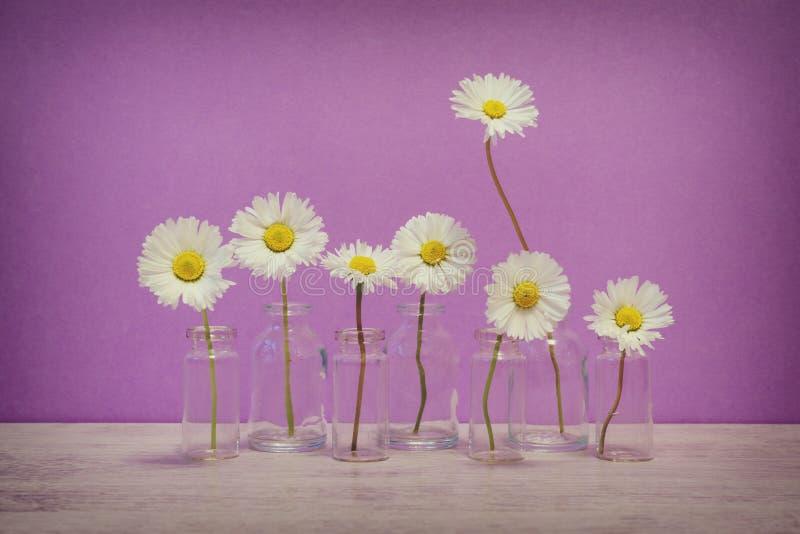 在最小的样式的夏天创造性的静物画 白色延命菊da 免版税图库摄影