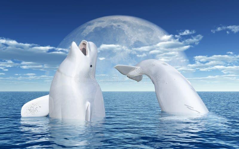 在月亮前面的白海豚鲸鱼 皇族释放例证