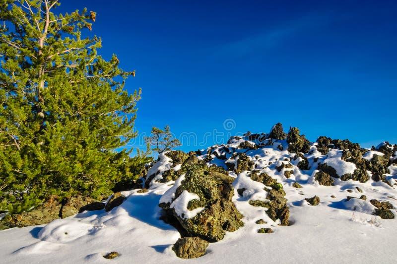 在月亮的火山口的树 库存照片