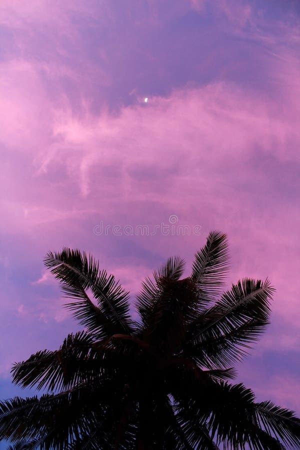 在月光下的棕榈树 库存照片