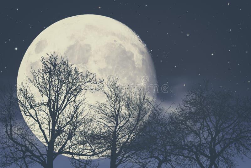 在月光下 免版税库存图片