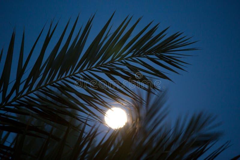 在月光的棕榈叶剪影 库存图片