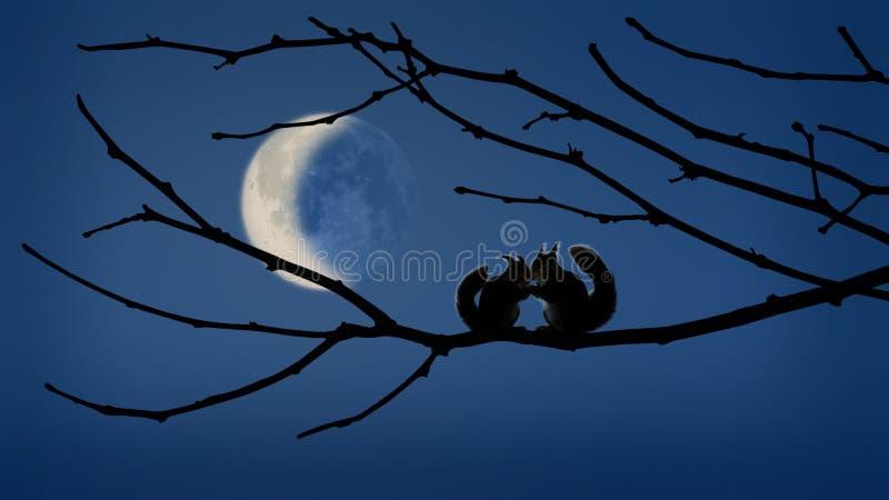 在月光的耳语 免版税库存图片