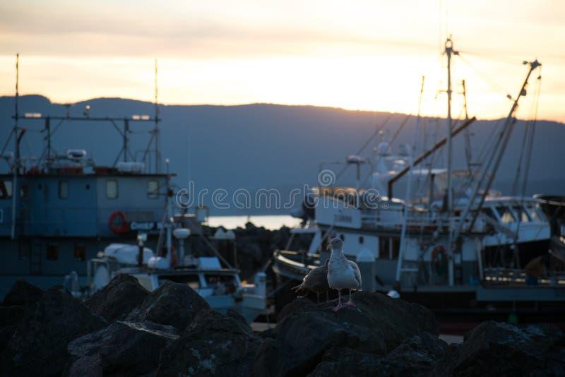 在小游艇船坞的日落 免版税库存图片