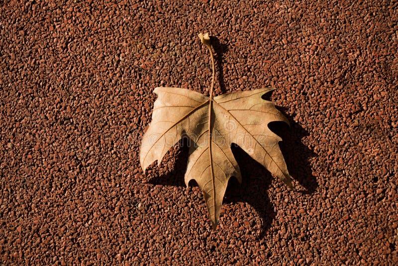 在有些背景安置的干燥叶子 免版税库存照片