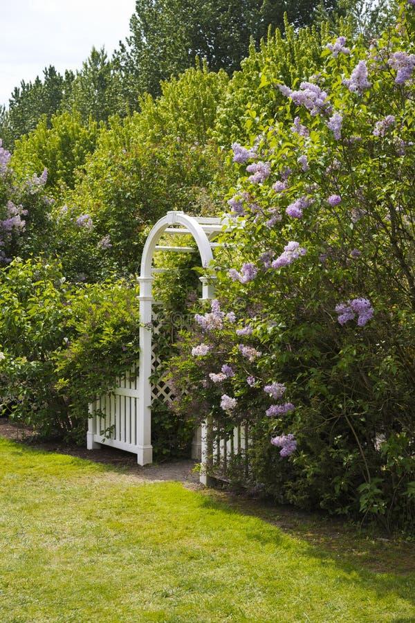 在有开花的丁香的绿色庭院里成拱形 免版税库存照片