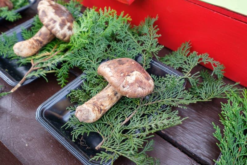 在有杉木叶子的盘子弄脏的Matsutake蘑菇 免版税库存照片