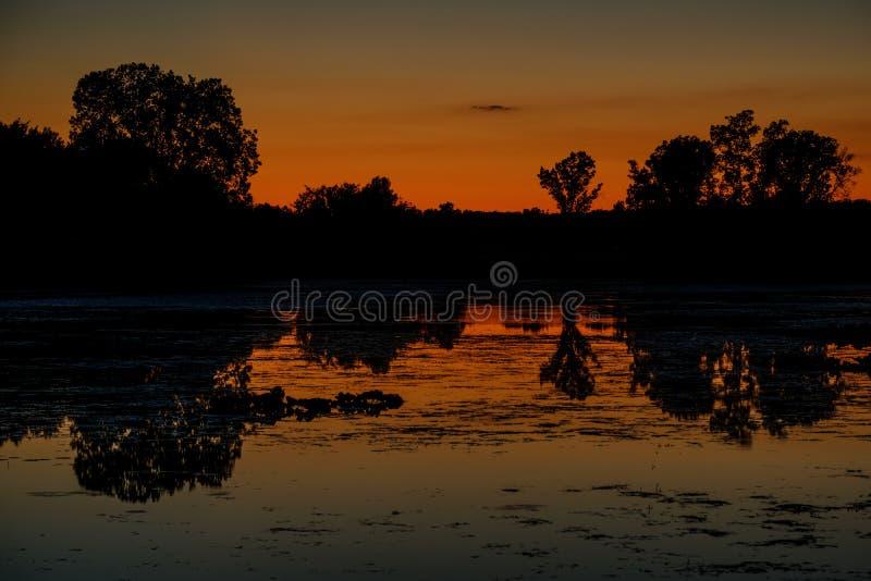 在有现出轮廓的树的Michigan湖反射的深黄日落 免版税库存图片