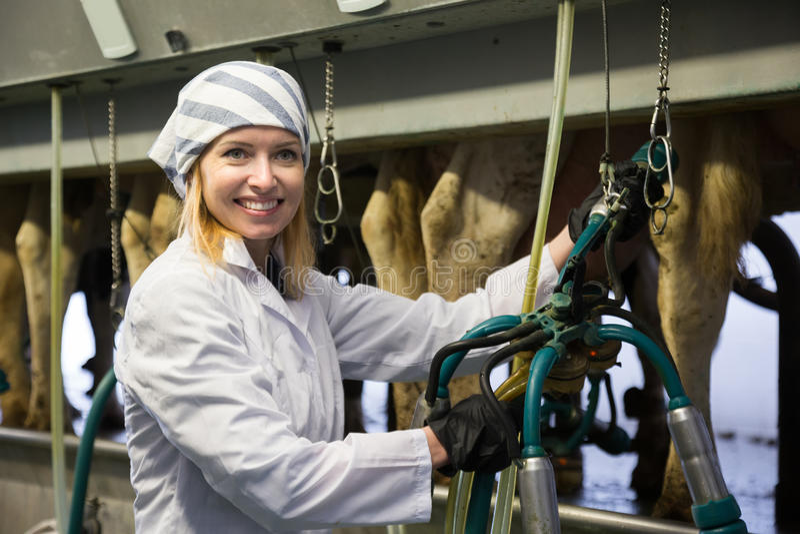 在有自动母牛挤奶机的牛棚种田挤奶的妇女 免版税库存图片