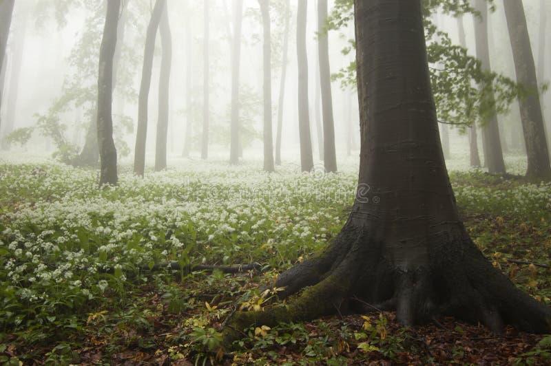 在有花的森林里反弹在绽放和雾 库存图片