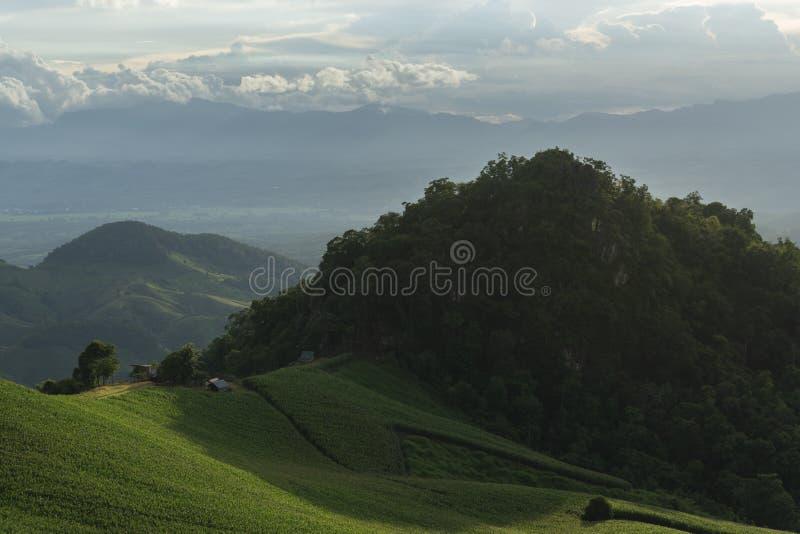 在有薄雾的早晨山的美好的阳光 库存照片