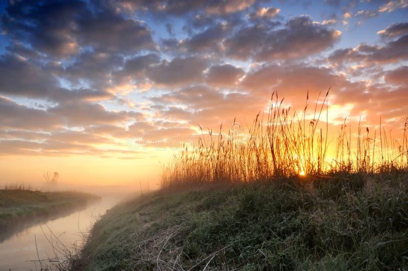 在有薄雾的河和芦苇的日出 免版税库存图片