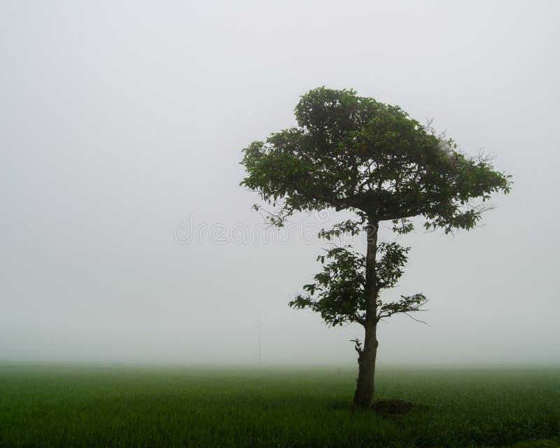在有薄雾的草甸中间的孤立树 免版税图库摄影