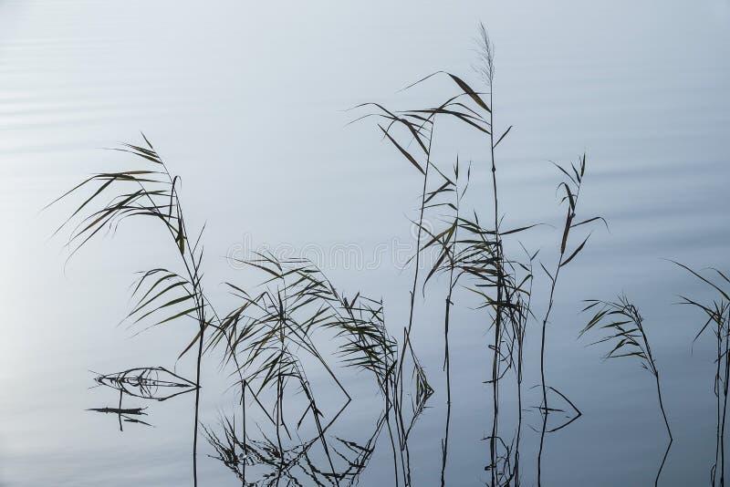 在有薄雾的风景的软的波纹 平安的大雾的里德 免版税库存图片