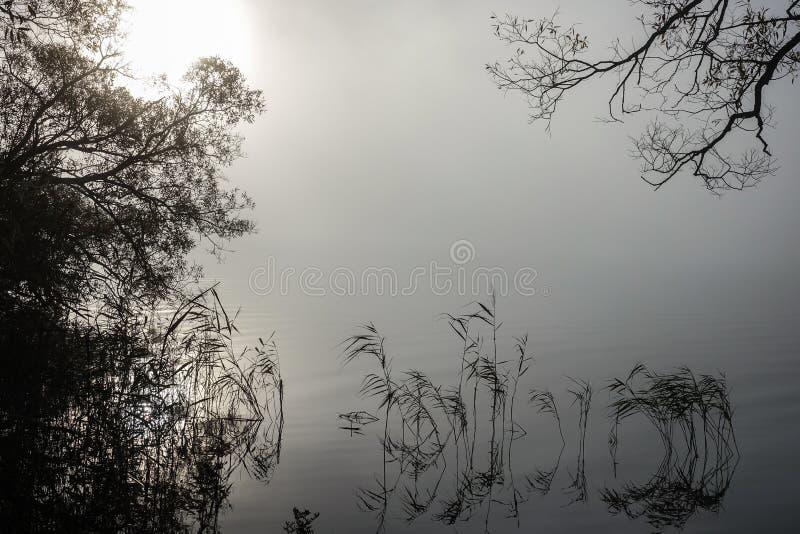 在有薄雾的风景的软的波纹 平安的大雾 库存照片