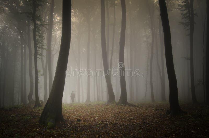 在有雾的一个森林里供以人员走在巨大的树下 图库摄影