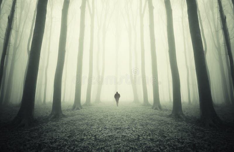 在有雾的一个神奇对称森林里供以人员走 免版税库存图片