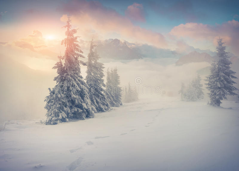 在有雾的山的美好的冬天日出 免版税库存图片