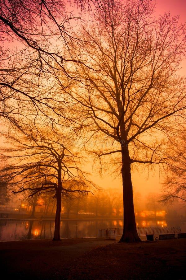 在有雾的池塘的橙色和桃红色日落有树的 免版税库存图片