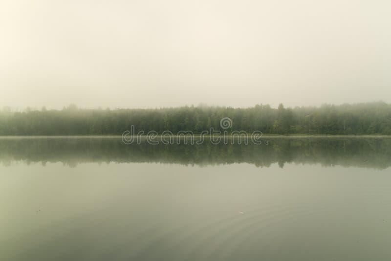 在有雾的湖的初夏早晨 免版税库存图片