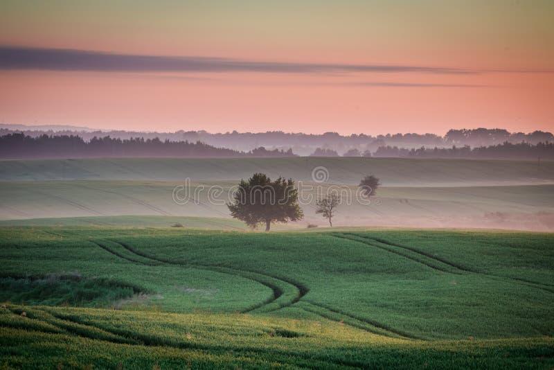 在有雾的领域的美妙的黎明在夏天 免版税库存图片