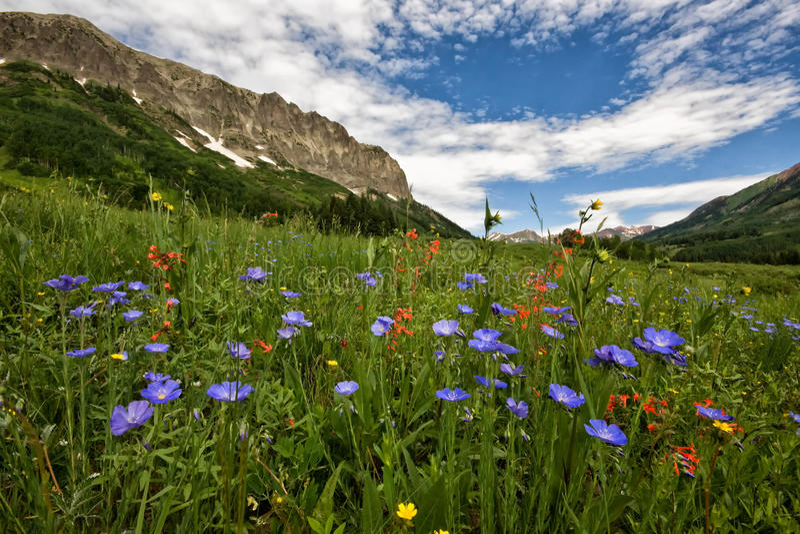 在有顶饰小山的野花 免版税库存照片