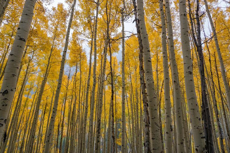 在有顶饰小山,科罗拉多的秋天颜色 库存图片