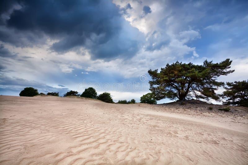 在有风多暴风雨的天气的沙子纹理 免版税图库摄影