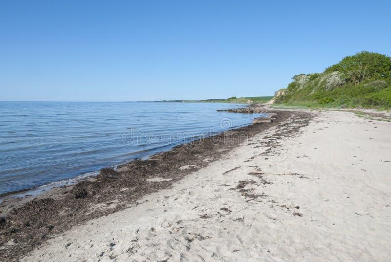 在朗厄兰岛海岛丹麦的沙滩 图库摄影