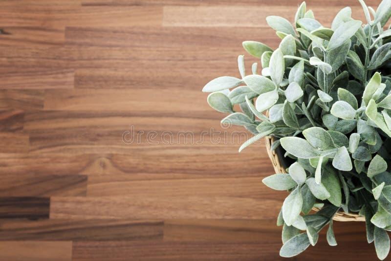 在木书桌上的植物 库存照片