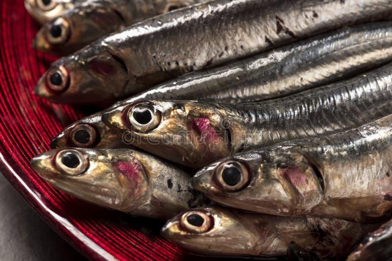 在木切板和板材的鱼鲥鱼 库存图片