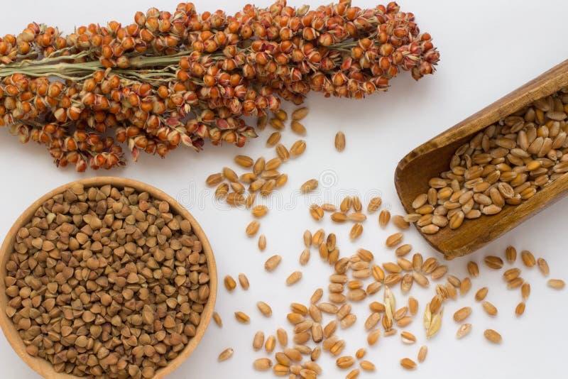 在木匙子、分支芦粟和荞麦的麦子在白色backg 图库摄影