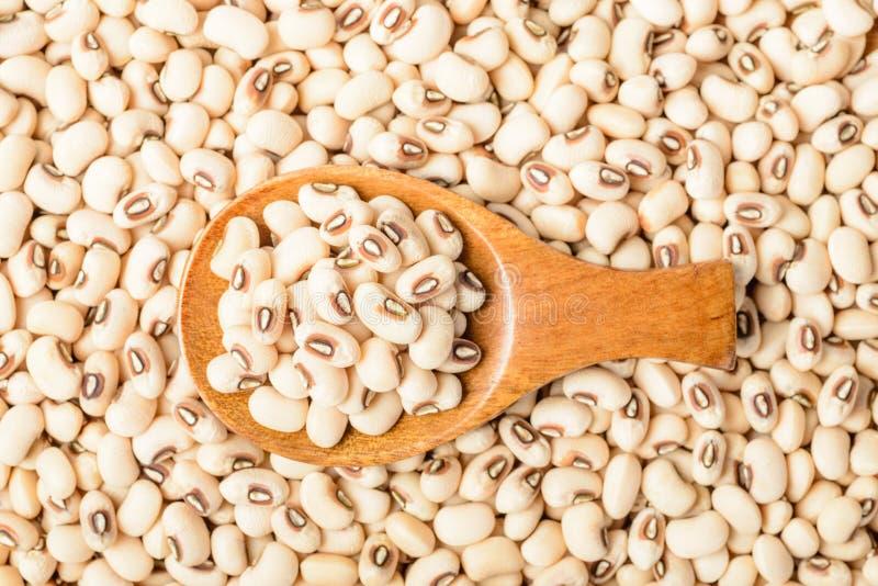在木匙子的未煮过的白色母牛豌豆豆 库存图片