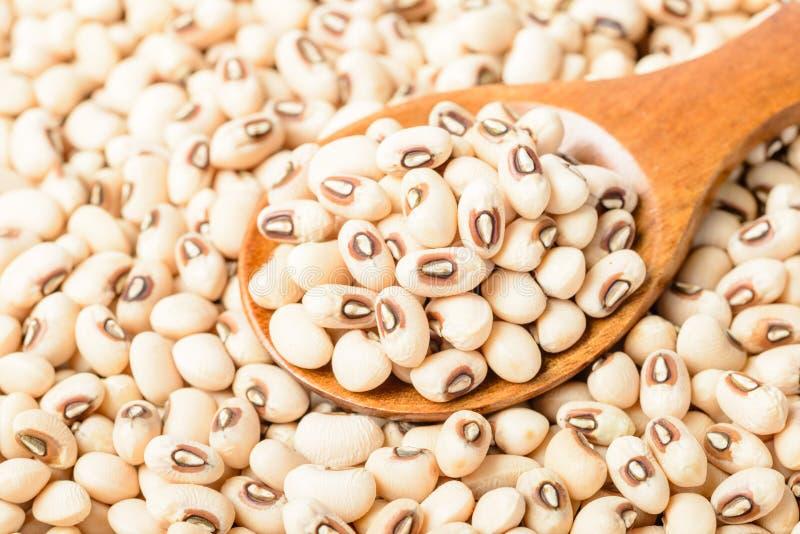 在木匙子的未煮过的白色母牛豌豆豆 图库摄影