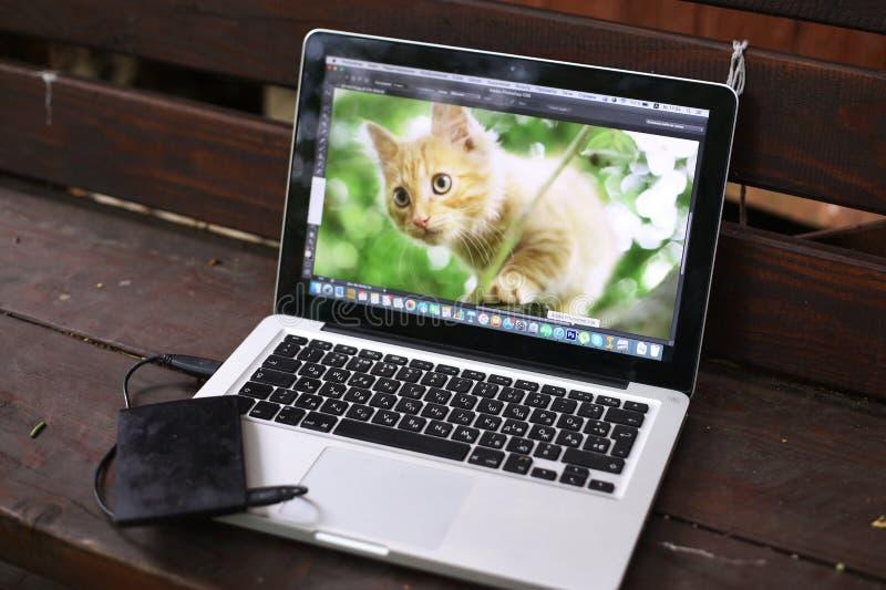 在木国家长凳的摄影师膝上型计算机与红色小猫 库存照片