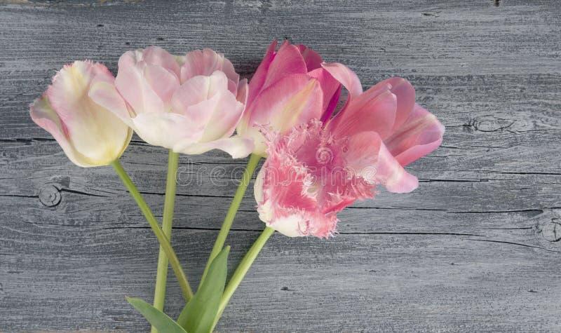 在木土气蓝色桌背景的桃红色郁金香花花束为母亲节卡片或假日,拷贝空间,顶视图 库存图片