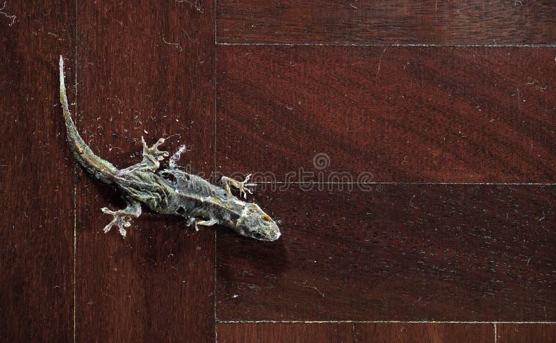 在木地板上的干共同的议院壁虎 库存图片
