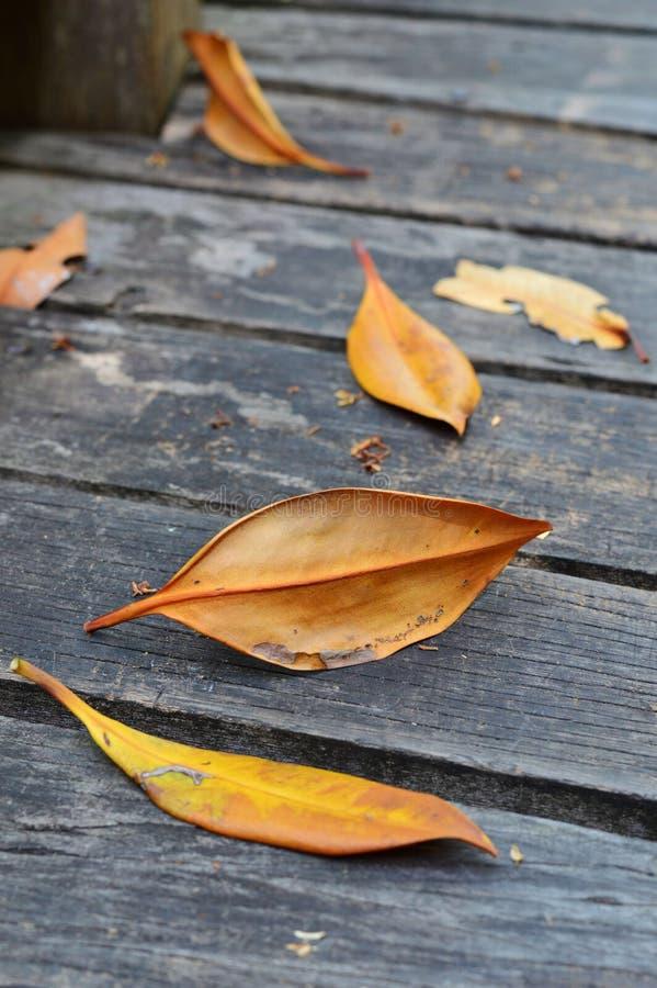 在木地板上的干叶子。 免版税库存图片