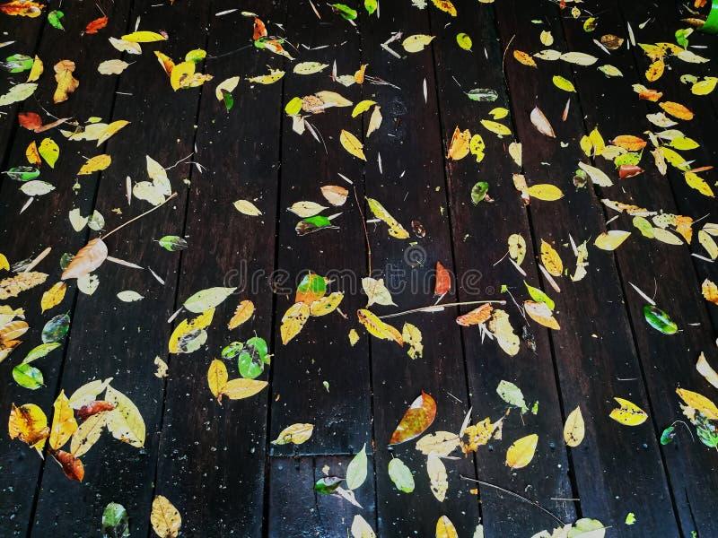 在木地板上的秋叶 库存照片