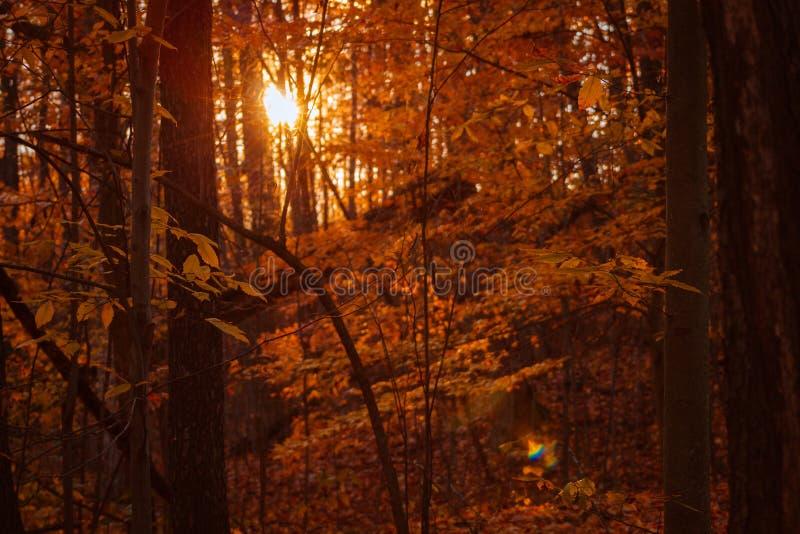 在木头的太阳设置在一次远足期间在一秋天天 库存照片