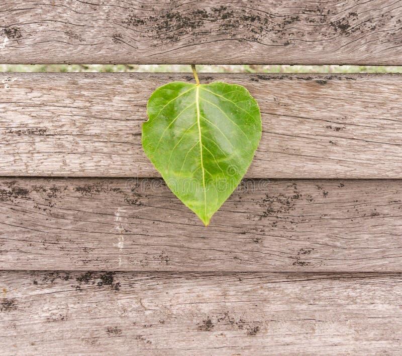 在木头的心形的叶子 免版税图库摄影
