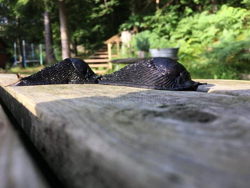 在木委员会的两只蜗牛 免版税库存图片