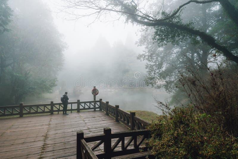 在木平台有雪松的和雾的男性旅游身分在背景中在森林里在阿里山 库存照片
