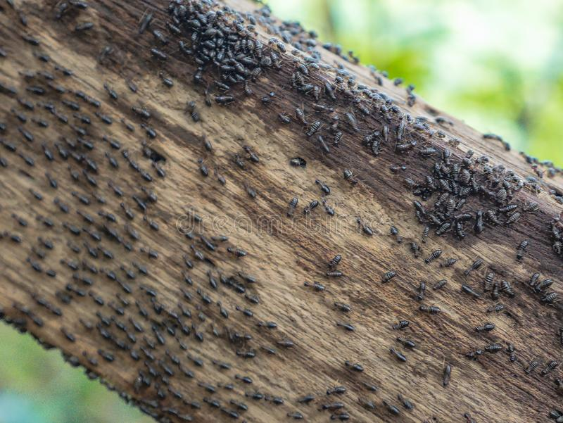 在木扶手栏杆的白蚁用在Khao Luang山上面的方式在Ramkhamhaeng国立公园 免版税库存图片