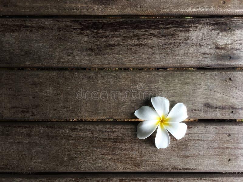 在木木板走道背景槽孔的白色赤素馨花  图库摄影