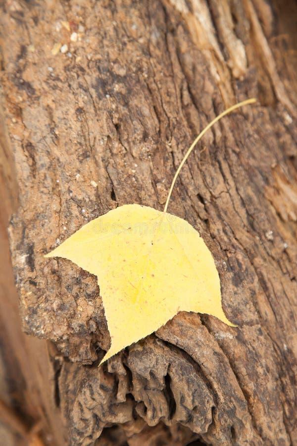 在木材的叶子 库存图片