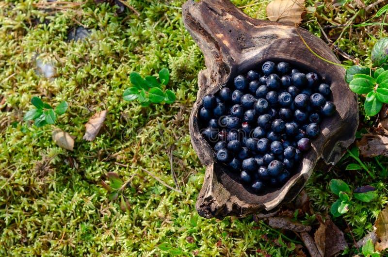 在木杯子的越桔在杯子的森林新鲜的越桔在森林A杯子的地面上越桔 库存图片