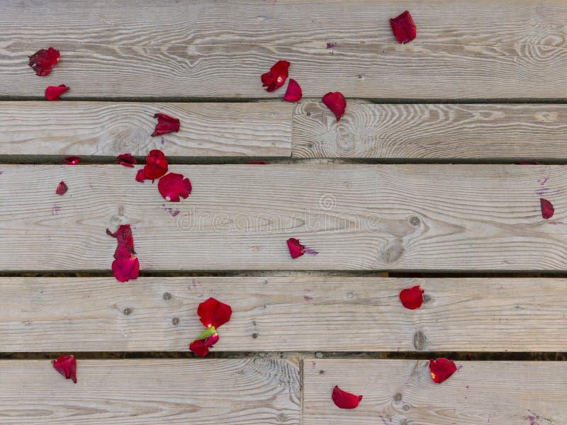 在木板条的红色玫瑰花瓣 木背景、纹理图形设计的和数字艺术 库存图片