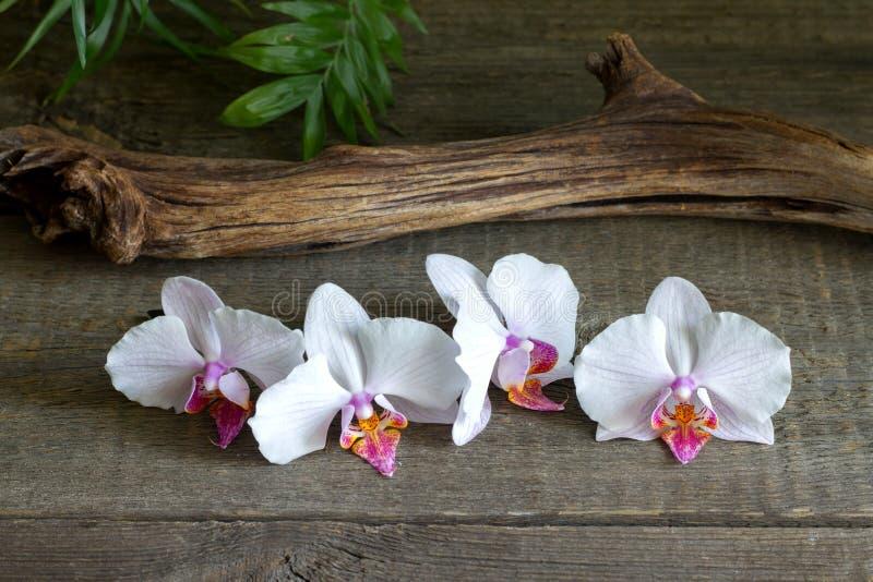 在木板禅宗温泉摘要静物画的兰花 库存图片