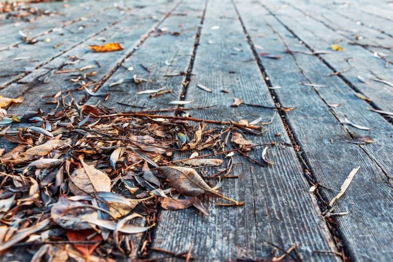 在木板走道的下落的叶子 库存照片